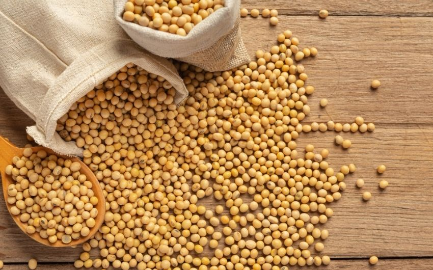 How To Eat Soybean For Bodybuilding