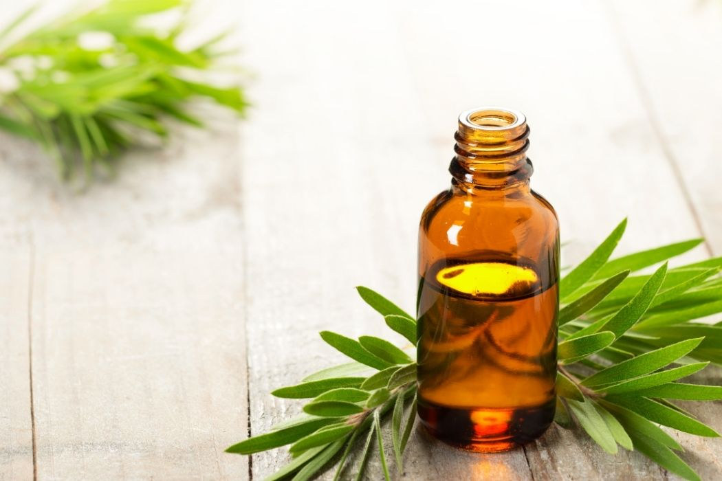 Benefits of Tea Tree Oil for Hair
