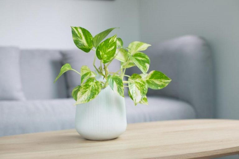 NASA Approved Air Purifying Indoor Plants To Combat Air Pollution